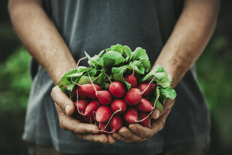 Manger cru pour un sportif, légumes sains.